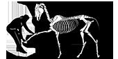 Hestefysioterapi Guldborgsund
